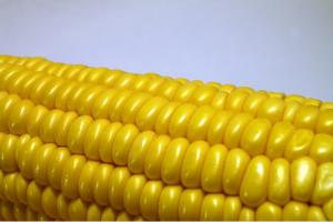 High Fructose Corn Syrup and Cholesterol Connection
