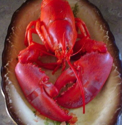 Lobster is rich in astaxanthin, powerful antioxidant: fights cholesterol