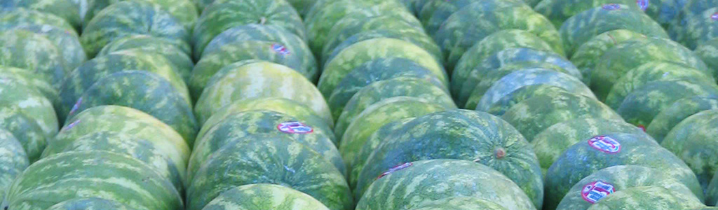 Watermelon Rich in Lycopene Helps Lower ldl Cholesterol